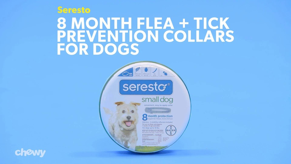 Seresto 8 Month Flea Tick Collar For Large Dogs Puppies At Low
