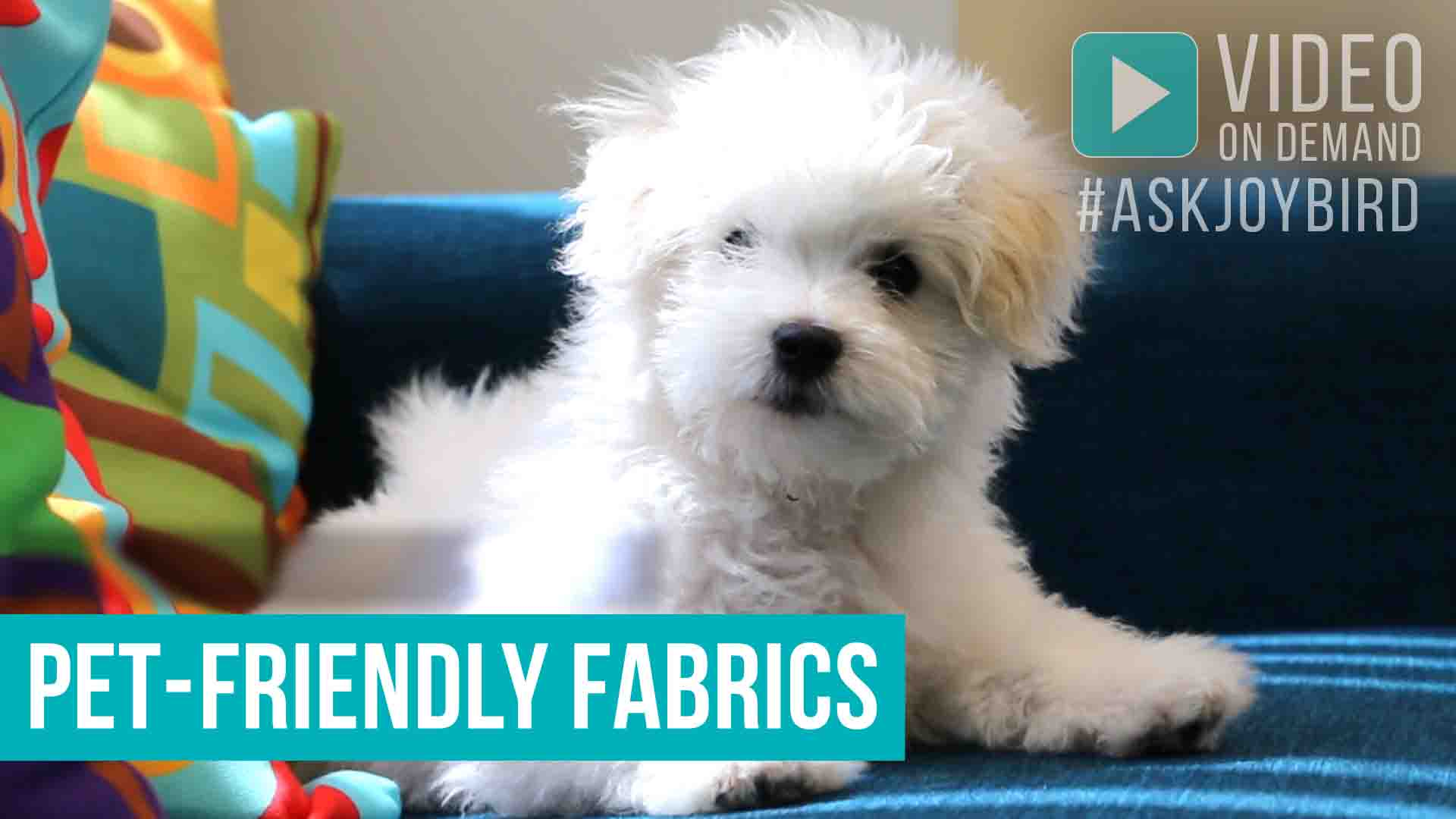 Pet Friendly Fabrics | Joybird
