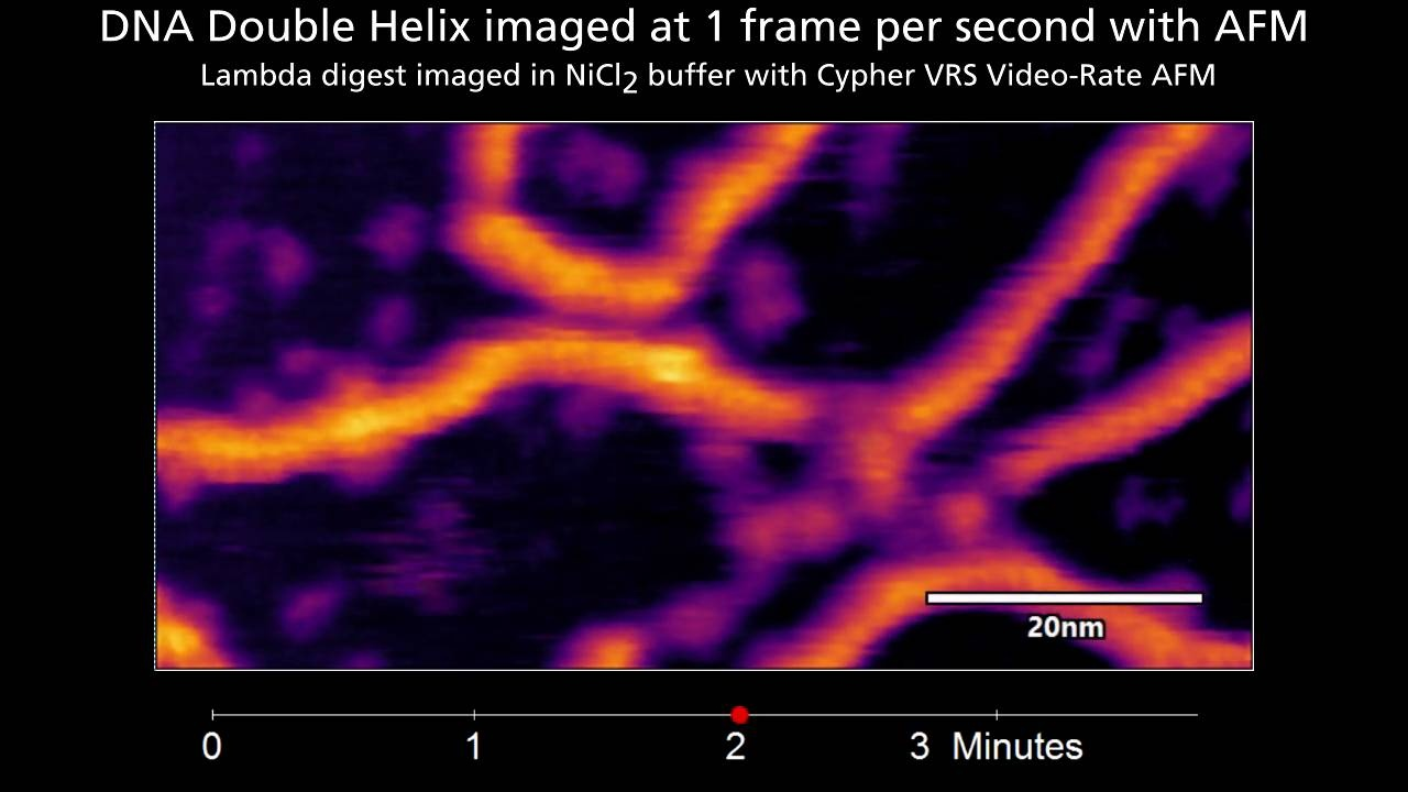 DNA imaged at 1 fps with double-helix resolution