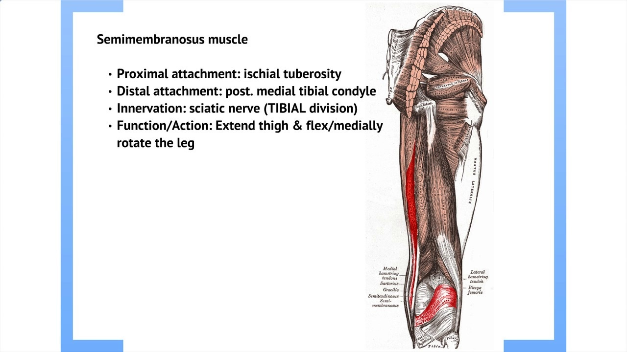 Podmedics Lower Limb Anatomy I