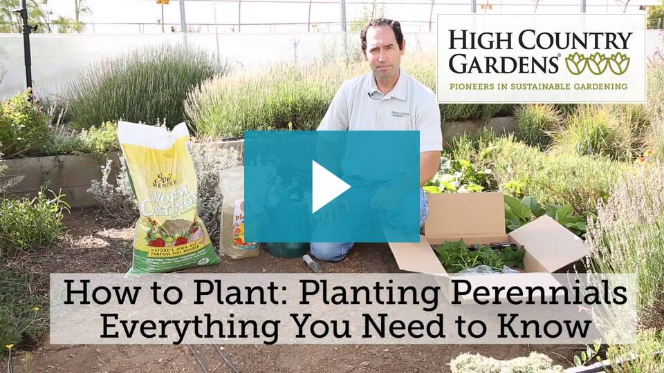 How To Plant Perennials With David Salman