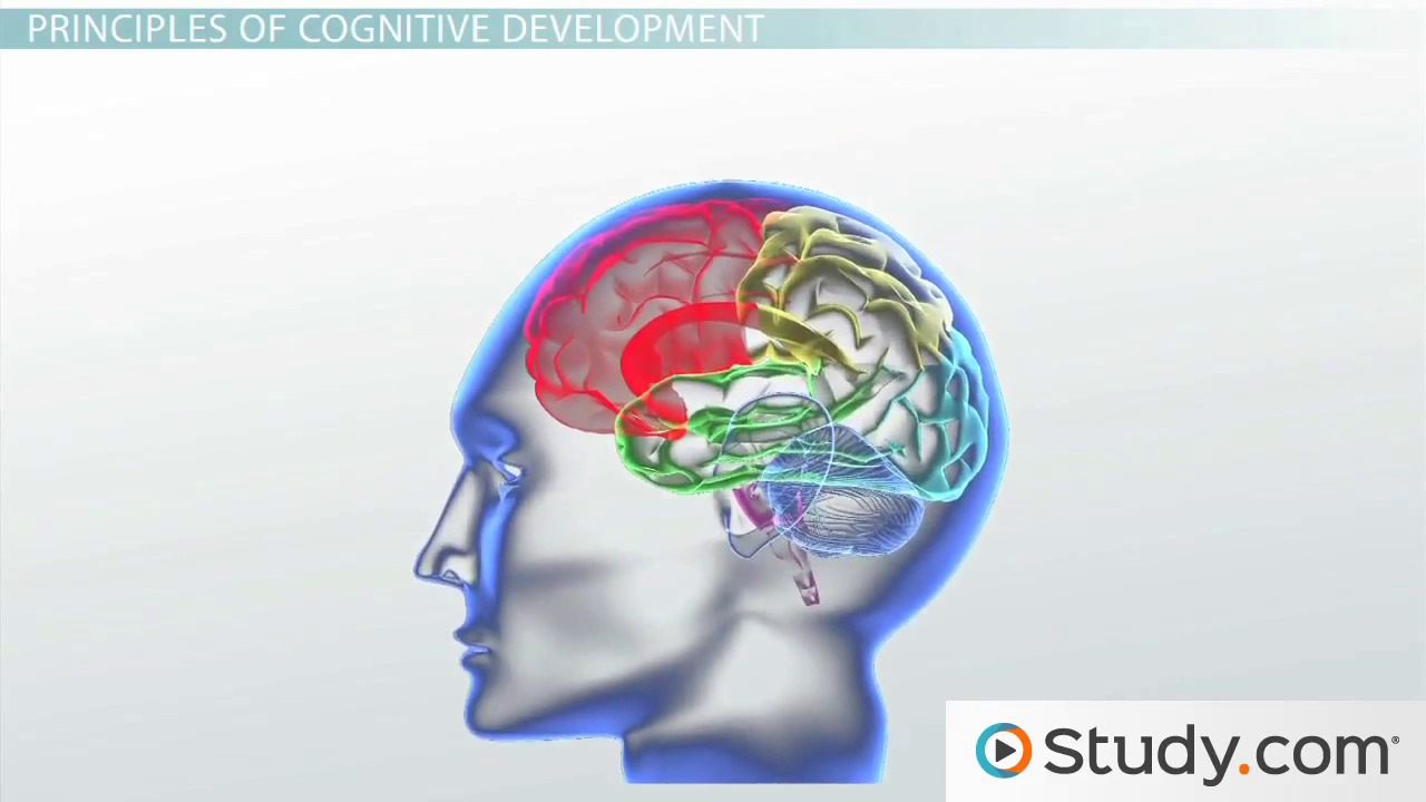 nature and nature in cognitive development The scientists call for tossing out the nature nurture child development scientists say scientists who led a study into the genetic basis of cognitive.