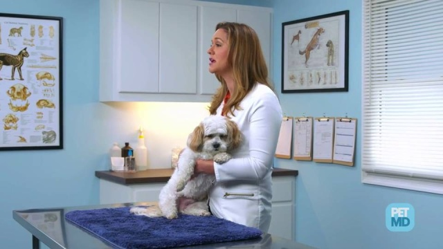 5 Tips for Preventing Ear Infections in Dogs   How to Prevent Dog