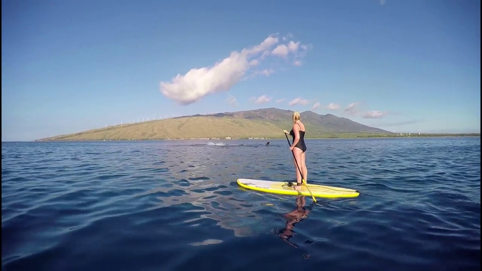 325b64c3a Maui Stand Up Paddle Board Lessons