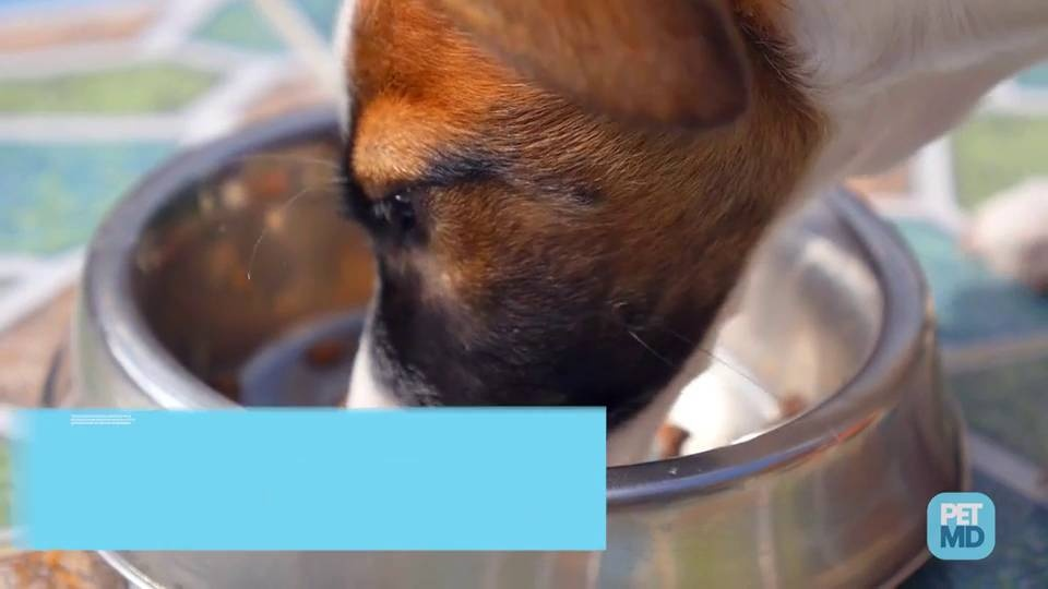 How Much Should Dogs Eat? | Calculate How Much to Feed Your Dog | petMD