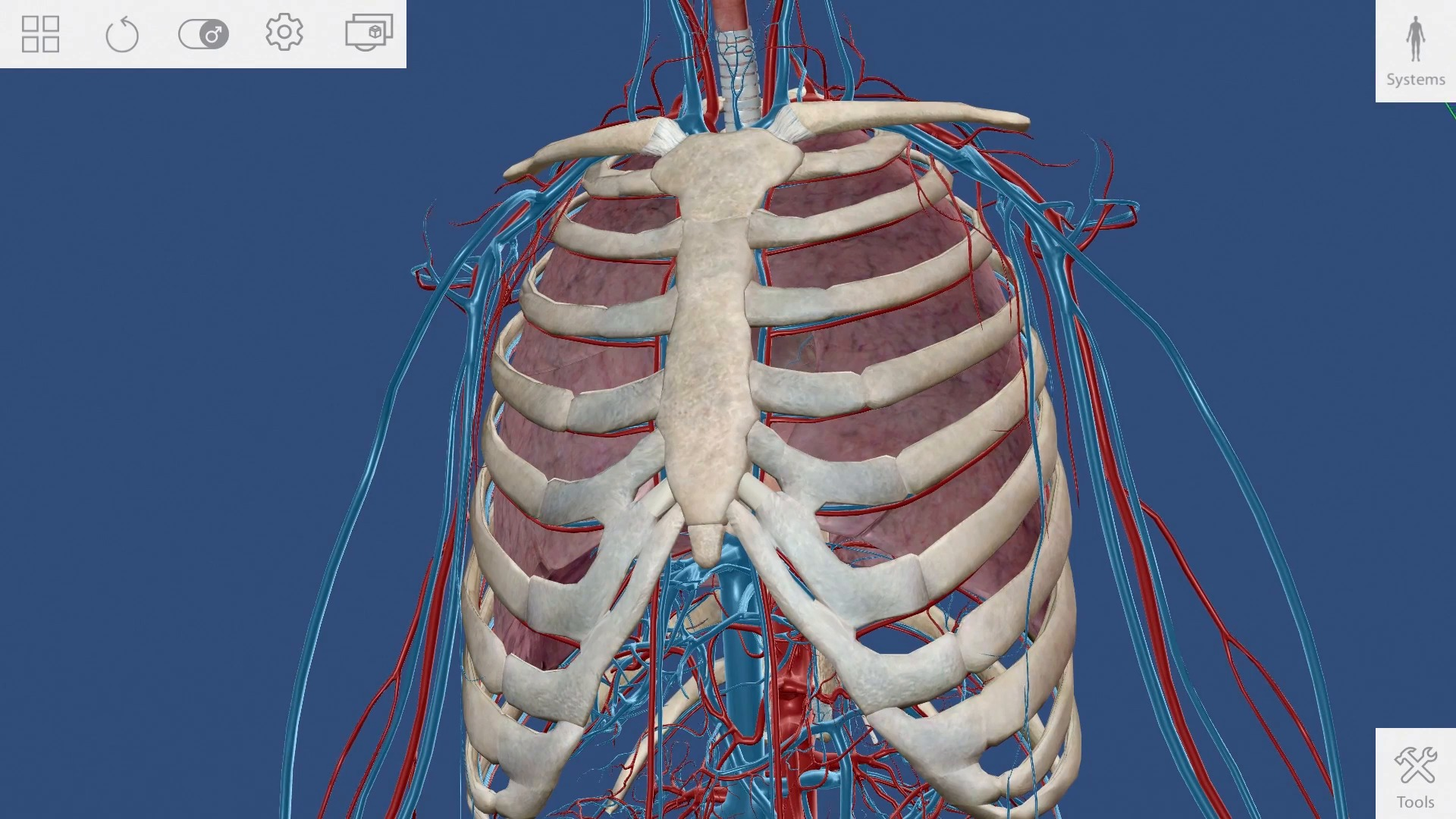 How To: Human Anatomy Atlas (Visible Body)