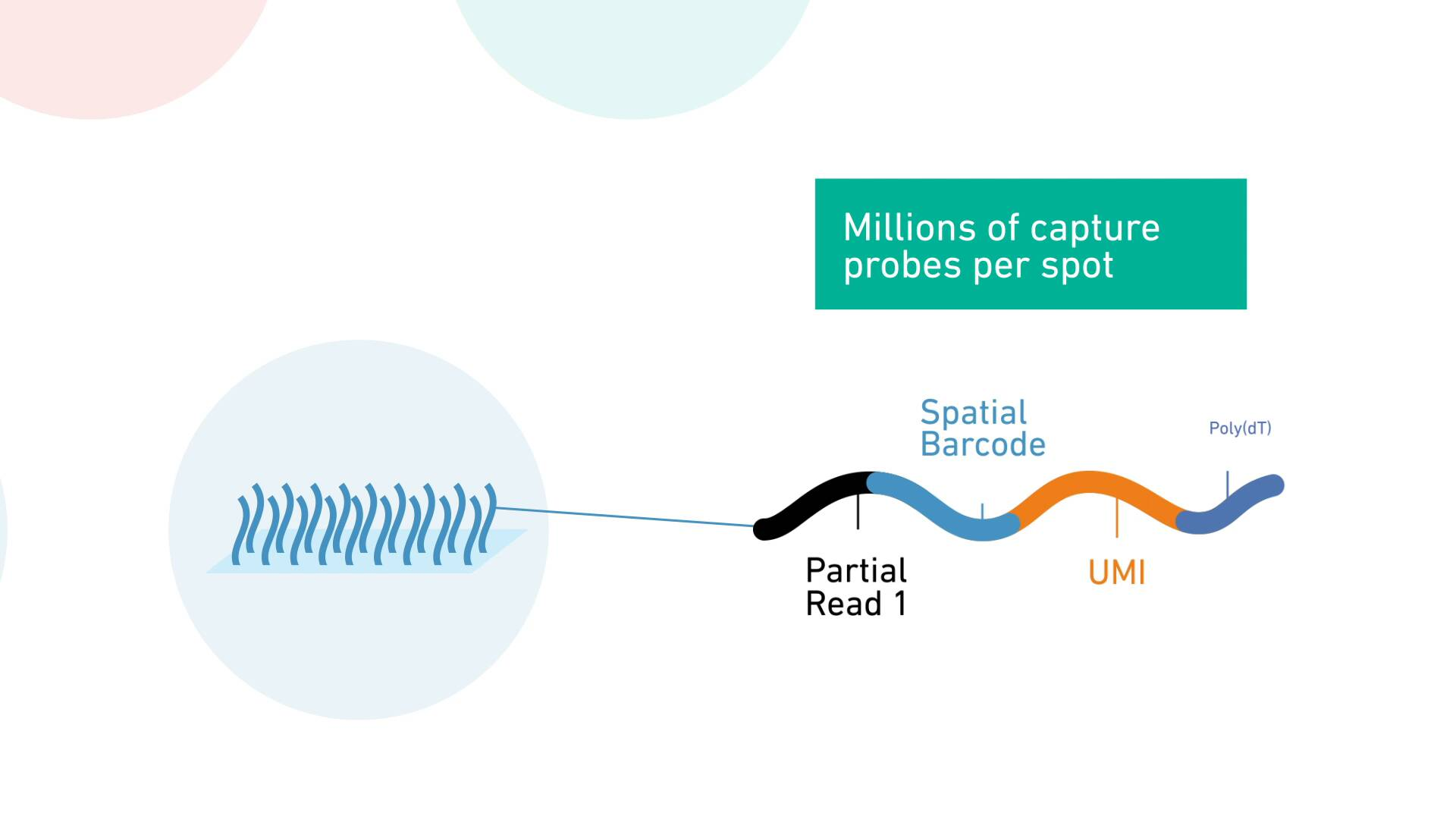 Learn More About the Visium Spatial Gene Expression Solution