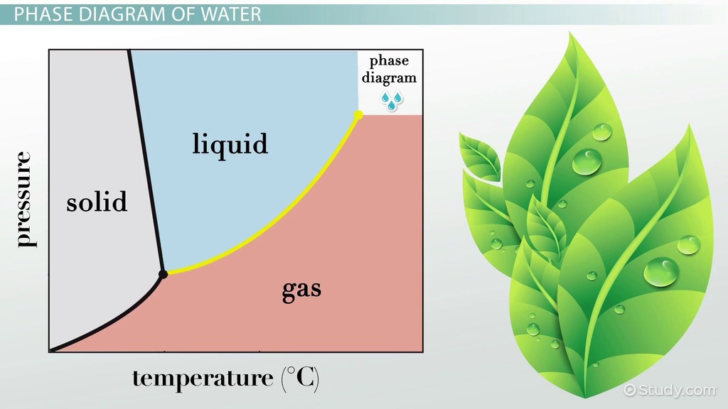 Phase Diagram of Water vs Other Substances: Differences & Meaning ...