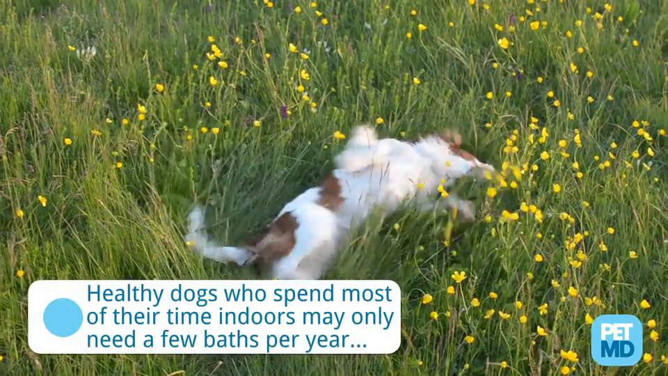 How Often Should You Bathe Your Dog? | petMD