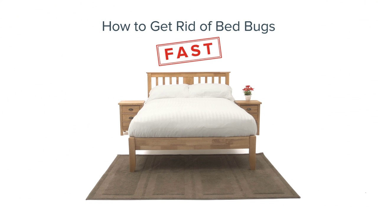 How to get rid of bed bugs permanently in kenya