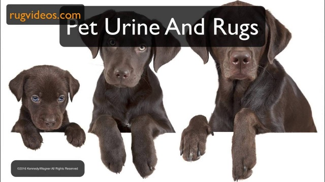 Wistia video thumbnail - 07. Pet Urine and Rugs sample