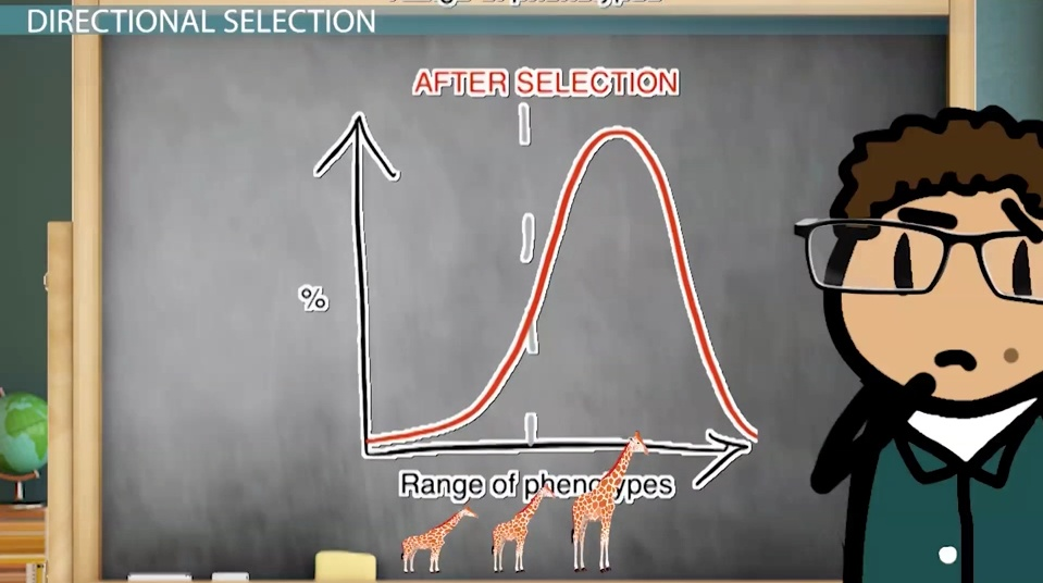 Analogous Structures Definition Examples Video Lesson - 23 examples natural selection work