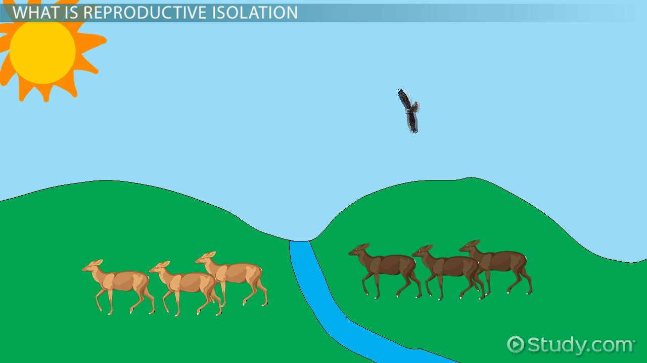 Reproductive Isolation Definition Types Examples Video - 23 examples natural selection work