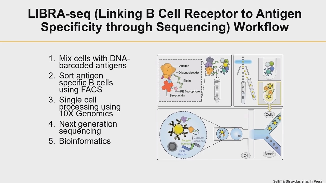 Antibody Discovery and Immune Profiling Using High-Throughput Single B Cell Sequencing
