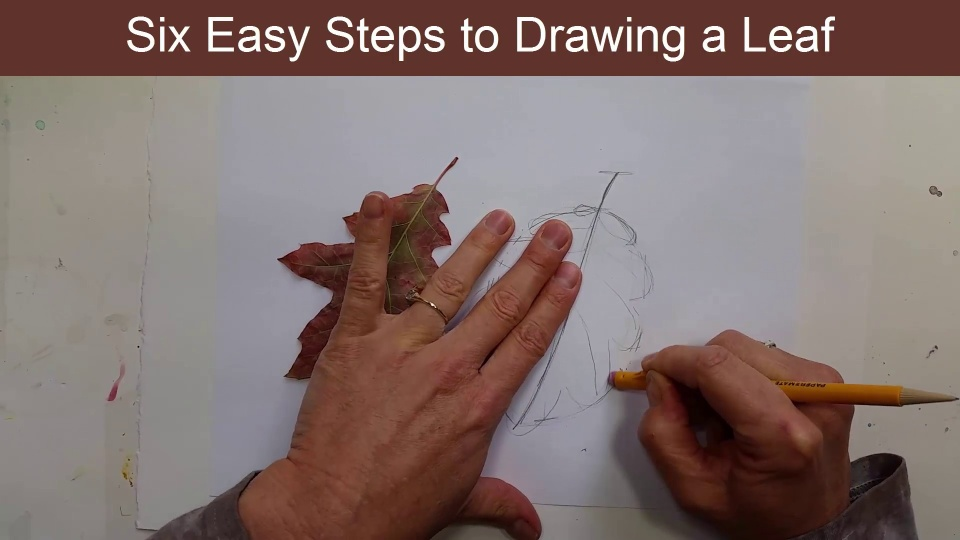 How To Draw Leaves For Beginners