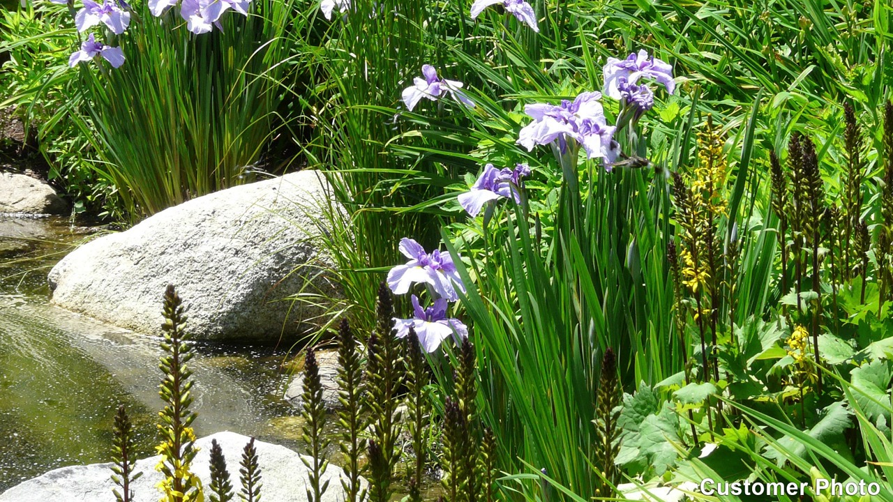 All about irises izmirmasajfo