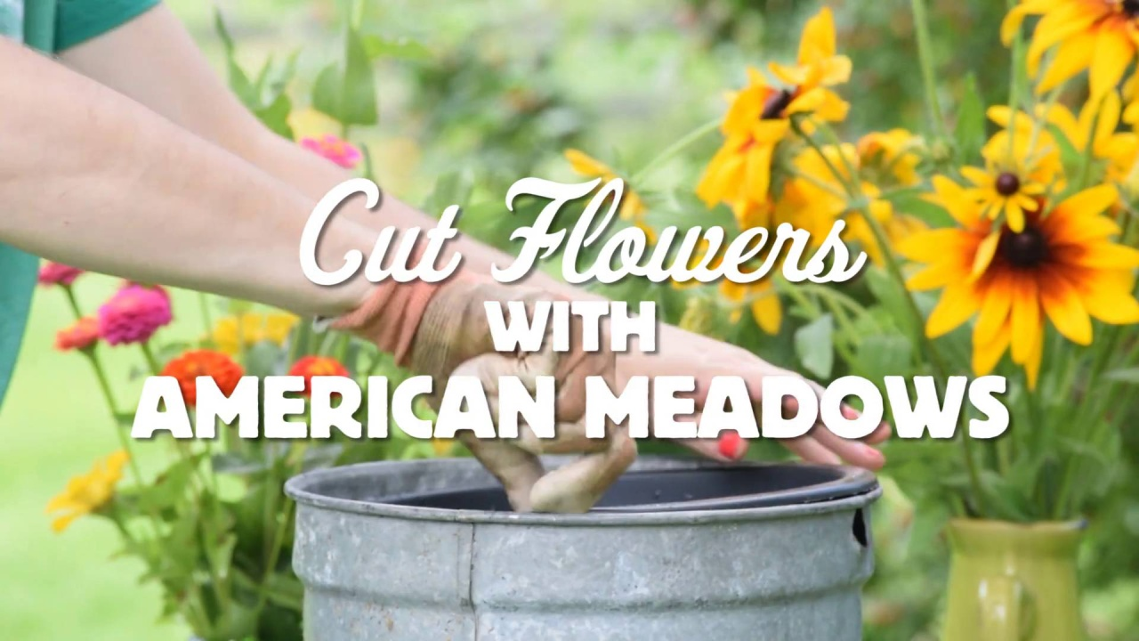 How To Create A Wildflower Bouquet American Meadows Blog
