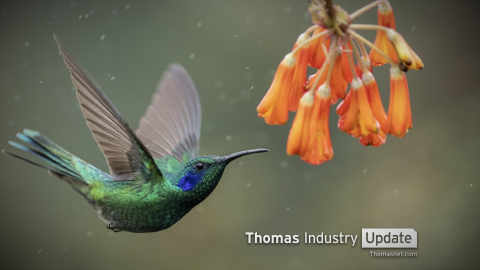 Robotic Hummingbirds Hover Like an Insect, Fly Like a Bird