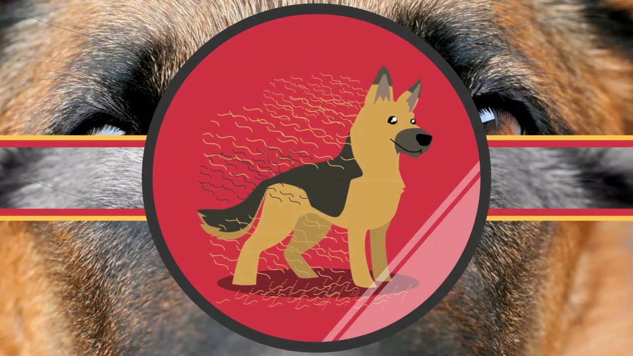 German Shepherds are fantastic companion dogs for an active family that has  some room to spare. They are devoted, loving dogs that are very protective  of ...